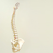 west-end-physio-vancouver-posture-training-education-therapy