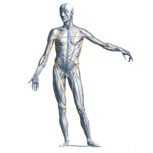 Vancouver Physiotherapy AnatomyTrainsbyThomasWMyers